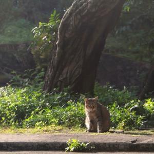 沖縄の猫たち 2020年1月 その14