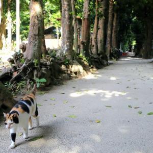 沖縄の猫たち 2020年1月 その16