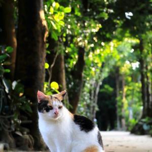 沖縄の猫たち 2020年1月 その20