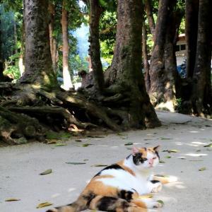 沖縄の猫たち 2020年1月 その22