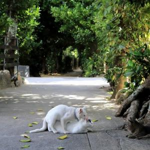 沖縄の猫たち 2020年1月 その23