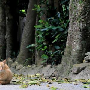 沖縄の猫たち 2020年2月 その6