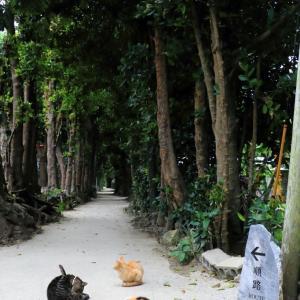 沖縄の猫たち 2020年2月 その8