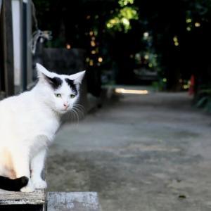 沖縄の猫たち 2020年2月 その26
