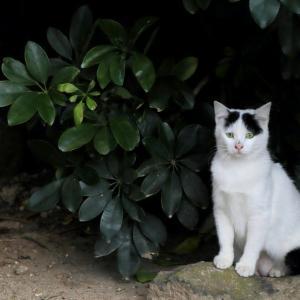 沖縄の猫たち 2020年2月 その27