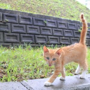 沖縄本島の猫たち 2020年6月 その2