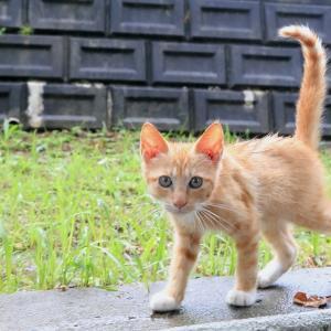 沖縄本島の猫たち 2020年6月 その3