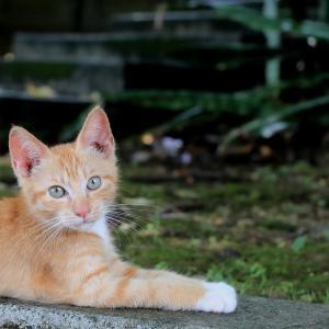 沖縄本島の猫たち 2020年6月 その8
