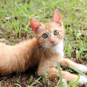 沖縄本島の猫たち 2020年6月 その9