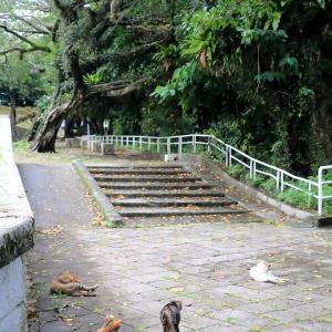 沖縄本島の猫たち 2020年6月 その10
