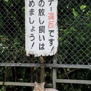 沖縄本島の猫たち 2020年6月 その11