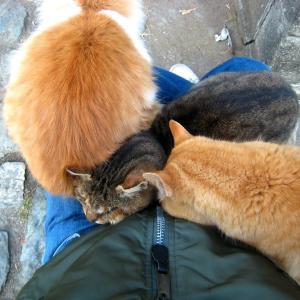 関東A島の猫たち 2011年1月12日 その4