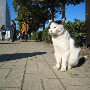 関東A島の猫たち 2011年1月18日 その3