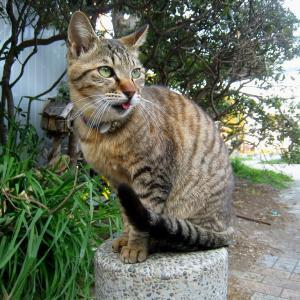 関東A島の猫たち 2011年3月29日 その2