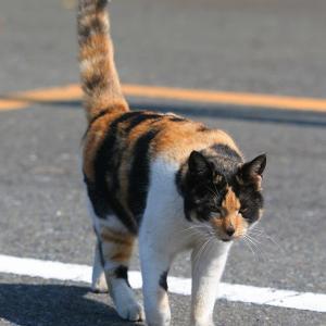関東A島の猫たち 2011年3月29日 その3