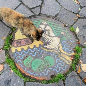 釧路の旅で出会った猫たち 2020年10月 その6
