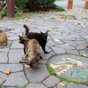 釧路の旅で出会った猫たち 2020年10月 その7