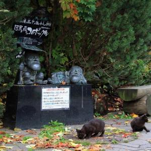 釧路の旅で出会った猫たち 2020年10月 その8