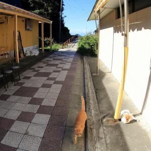 マグロ半島の猫たち 2020年11月 その3