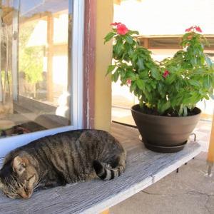マグロ半島の猫たち 2020年11月 その4