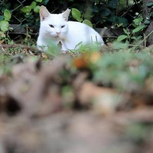 南の島の猫たち 2020年11月 その31