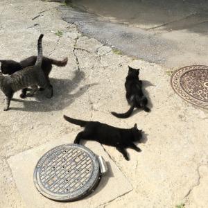南の島の猫たち 2020年11月 その32