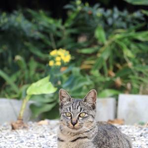 南の島の猫たち 2020年11月 その33