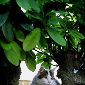 南の島の猫たち 2020年11月 その37