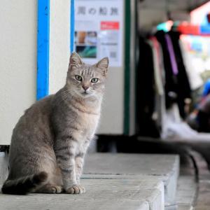 南の島の猫たち 2020年12月 その35