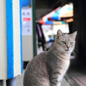 南の島の猫たち 2020年12月 その36