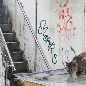 南の島の猫たち 2020年12月 その37