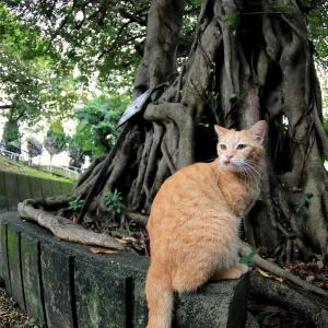 南の島の猫たち 2020年12月 その38