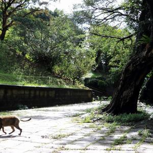 南の島の猫たち 2020年12月 その39