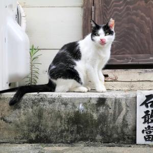南の島の猫たち 2020年12月 その40