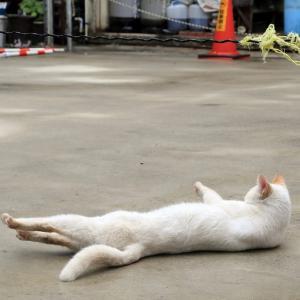 南の島の猫たち 2020年12月 その41