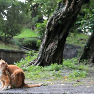 南の島の猫たち 2020年12月 その44