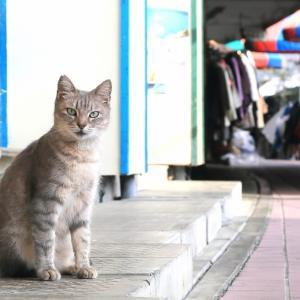 南の島の猫たち 2020年12月 その45