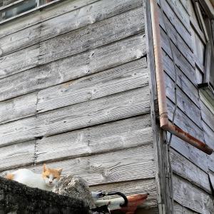 南の島の猫たち 2020年12月 その46