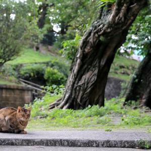 南の島の猫たち 2020年12月 その47