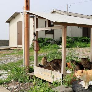 九州D島の猫たち 2021年3月 その2