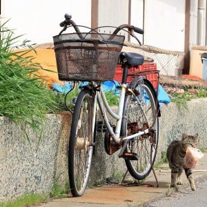 九州D島の猫たち 2021年3月 その3