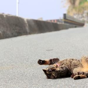 九州D島の猫たち 2021年3月 その4