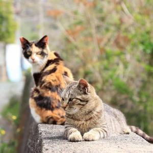 九州D島の猫たち 2021年3月 その5
