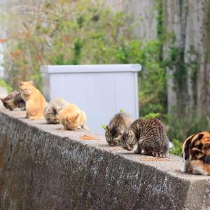 九州D島の猫たち 2021年3月 その6