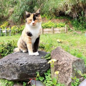 九州D島の猫たち 2021年3月 その7