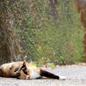 九州D島の猫たち 2021年3月 その8