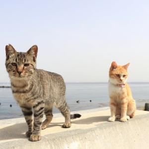 九州D島の猫たち 2021年3月 その9