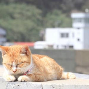 九州D島の猫たち 2021年3月 その10