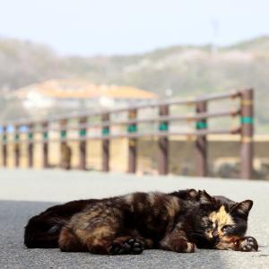 九州D島の猫たち 2021年3月 その11
