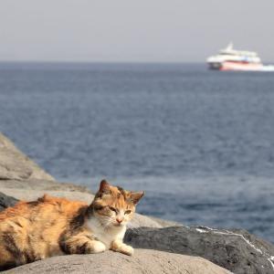 九州D島の猫たち 2021年3月 その12